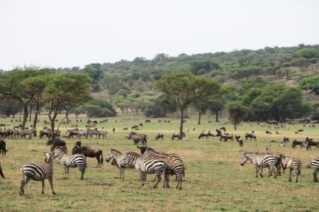 Serengeti Fotos