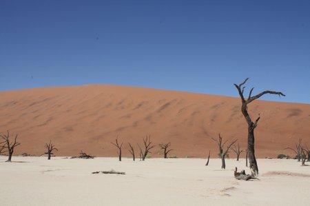 Deadvlei im Wüstengebiet von Sossusvlei
