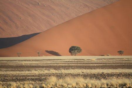 Dune 45 im Wüstengebiet von Sossusvlei