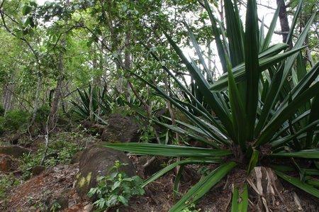 Kukui Trail im Waimea Canyon
