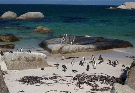 Bei den Pinguinen - Boulders Beach
