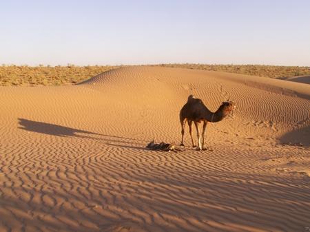 kamelsafari.jpg