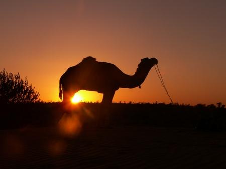 kameltourinjaisalmer.jpg