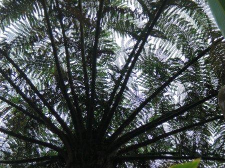 Baum auf Maui