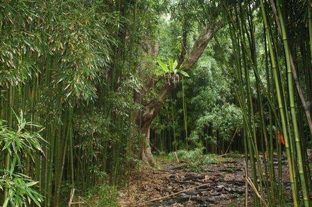 Hana-Highway & Waimoku Falls