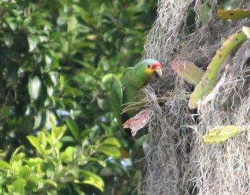 Vögel in Tikal