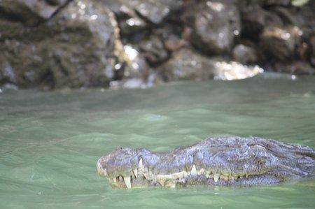 Krokodile in Mexiko