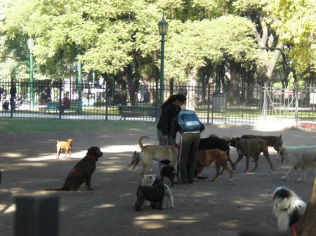 Dogkeeper in Buenos Aires