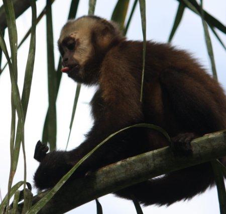 Tierwelt im Madidi Nationalpark