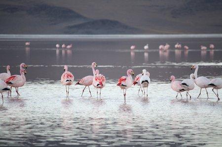 Laguna Colorado, Bolivien