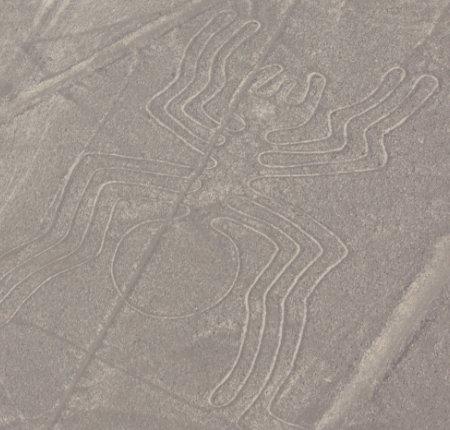 Spinne von Nazca