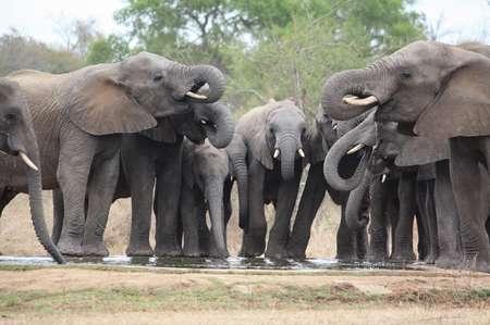 Elefantenherde am Wasserloch
