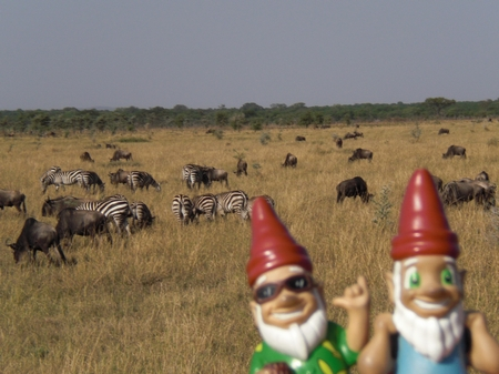 Gnomads in Afrika