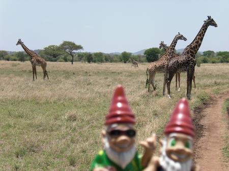Gnomads und Giraffen