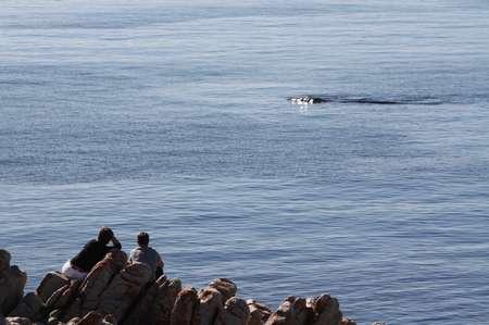 Südlicher Glattwal in Südafrika