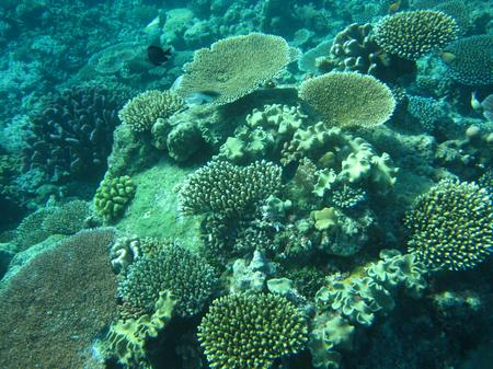 Great Barrier Reef, Australien